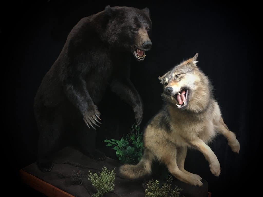 Bear and Wolf2