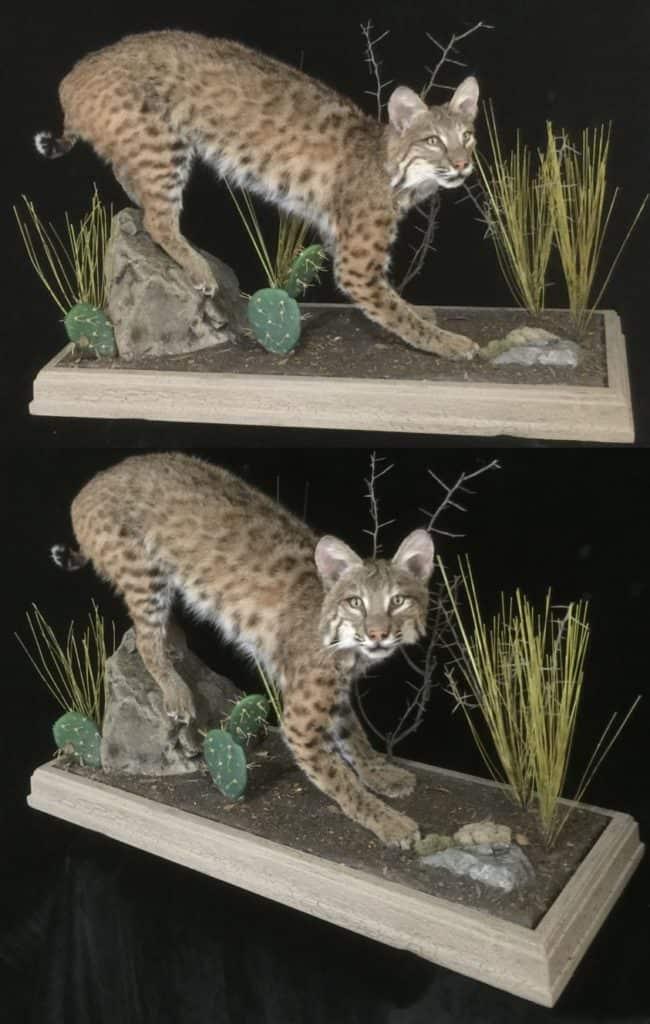 Bobcat Barnwood