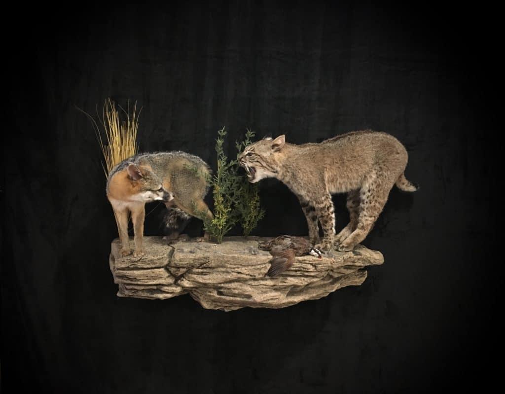 bobcat-fox-fb