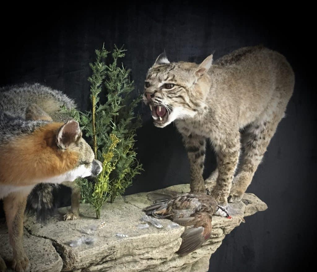 bobcat-view-fb