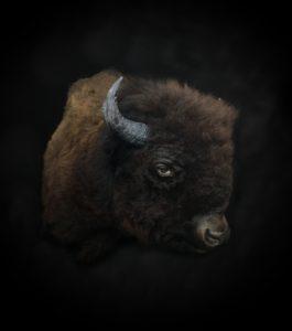 Buffalo3FB