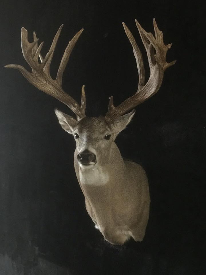 Deer2 FB