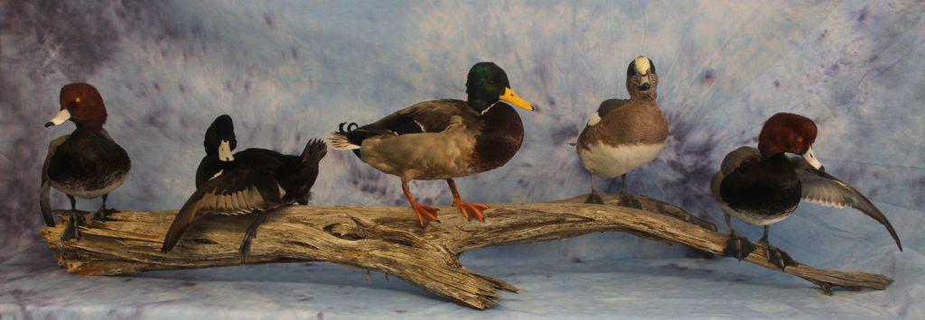 ducks-log-ws-fb