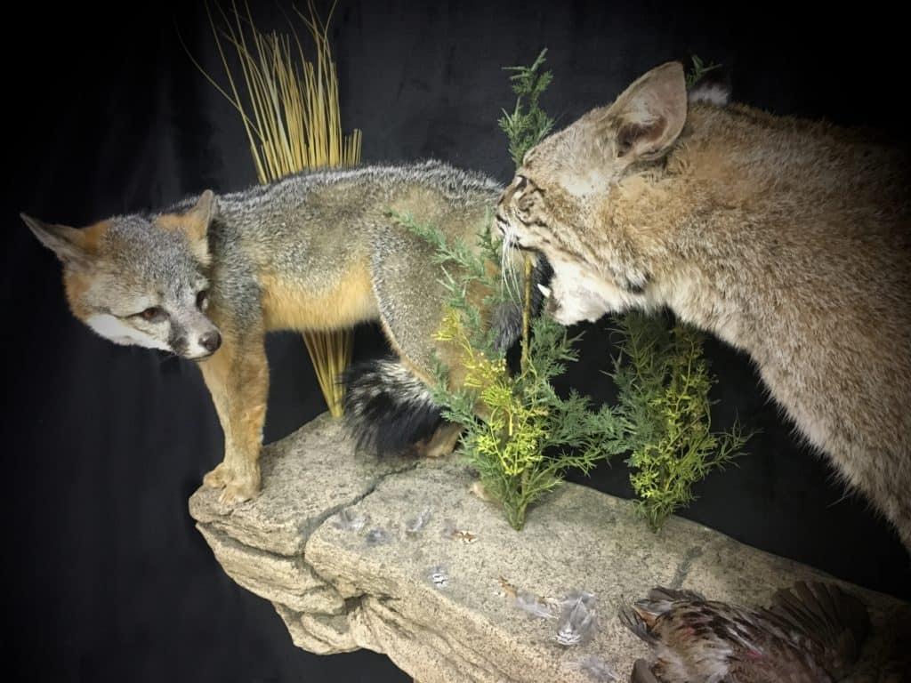 fox-view-fb