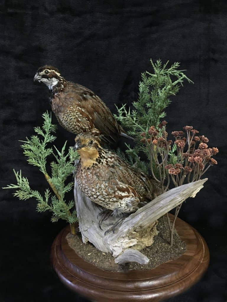 quail-couple
