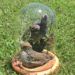 quail-dome