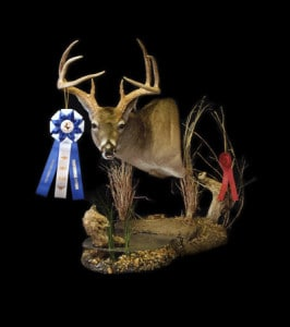 1st Place in Taxidermy Competition