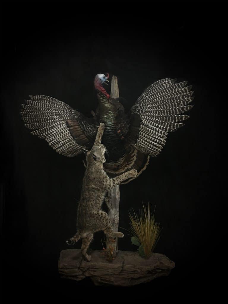 WS Turkey Bobcat FB