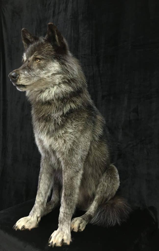 wolf-side-fb