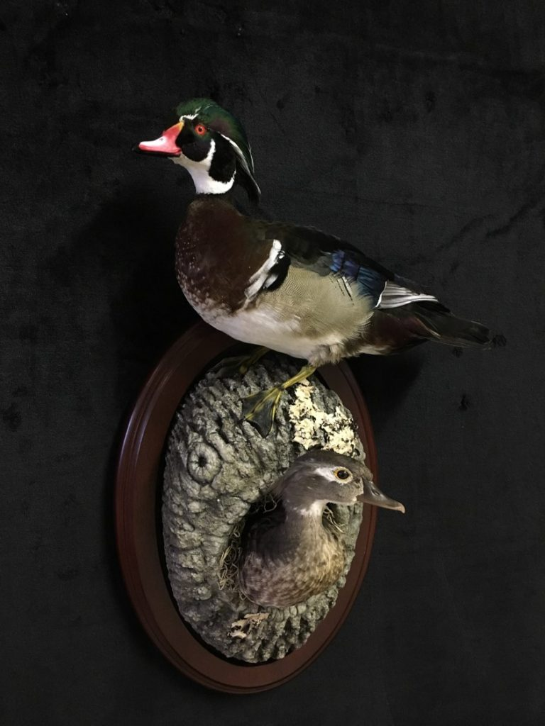 woodduck-couple-ws