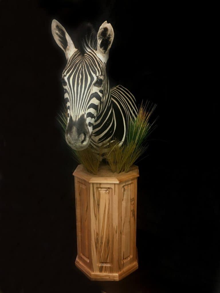 Zebra 1FB