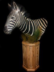 Zebra 2FB